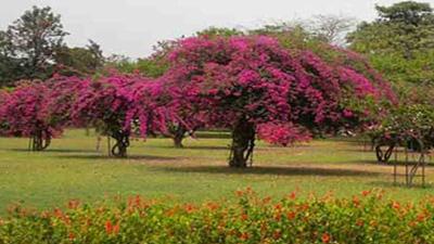 bougainvillea_garden_thumnail
