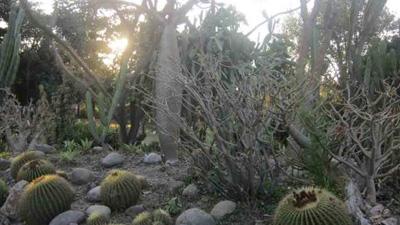 cactus_garden_thumnail